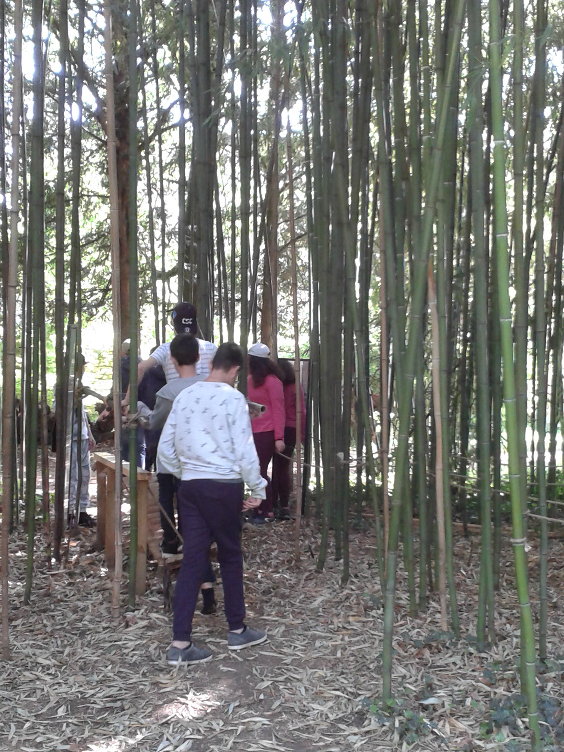 Cuisery bambouseraie